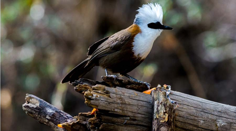 Bird watching Nainital