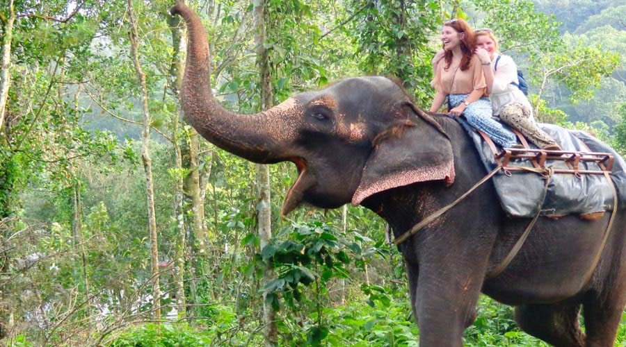 Elephant Safari Thekkady