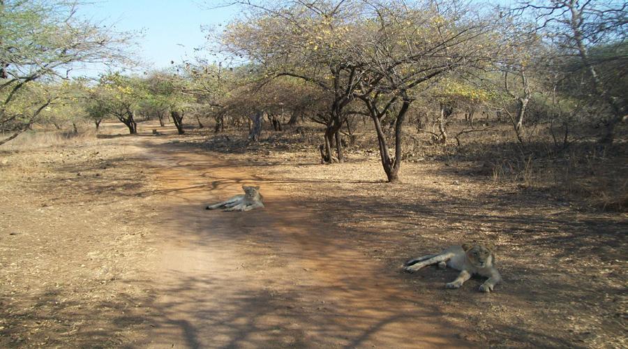 Sasangir Forest