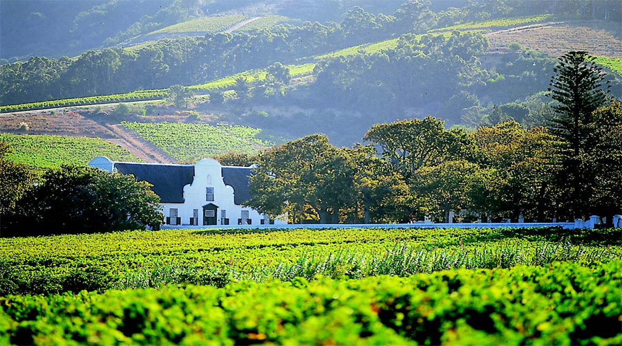 Constantia Wine Farms Capetown