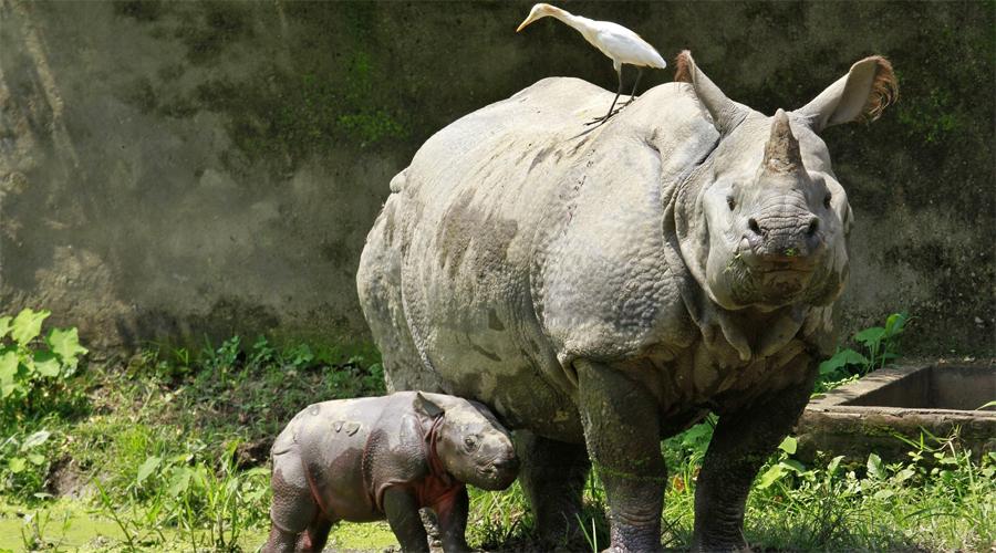 Zoo Guwahati