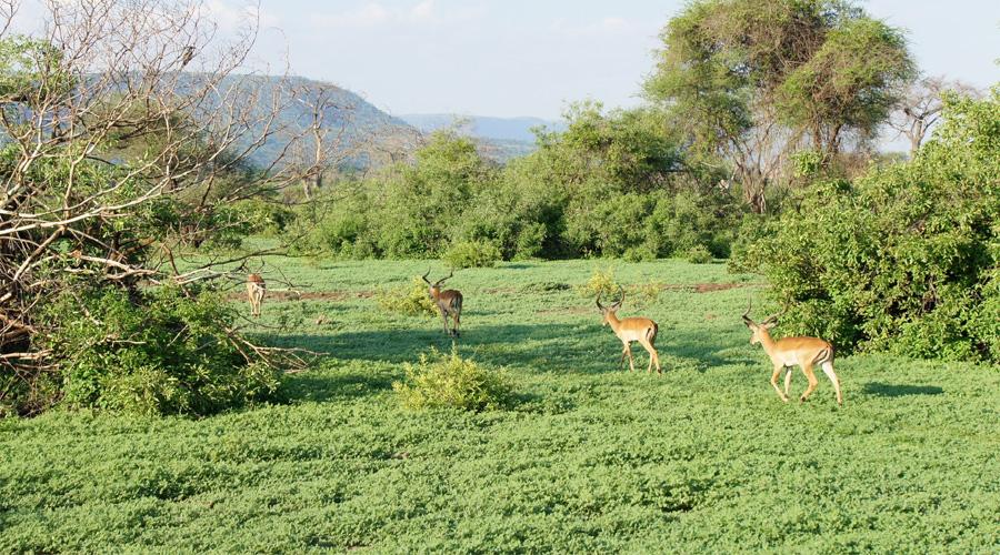 Lago Manyara National Park