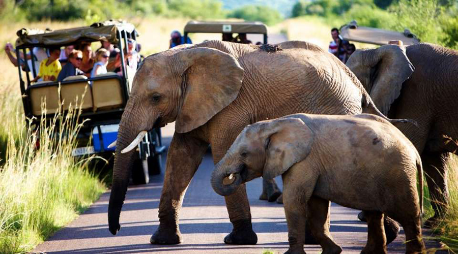 Pilanes National Safari