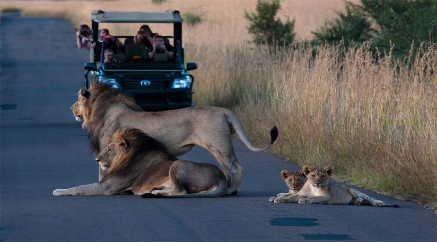 Pilanes National Park Jeep Safari