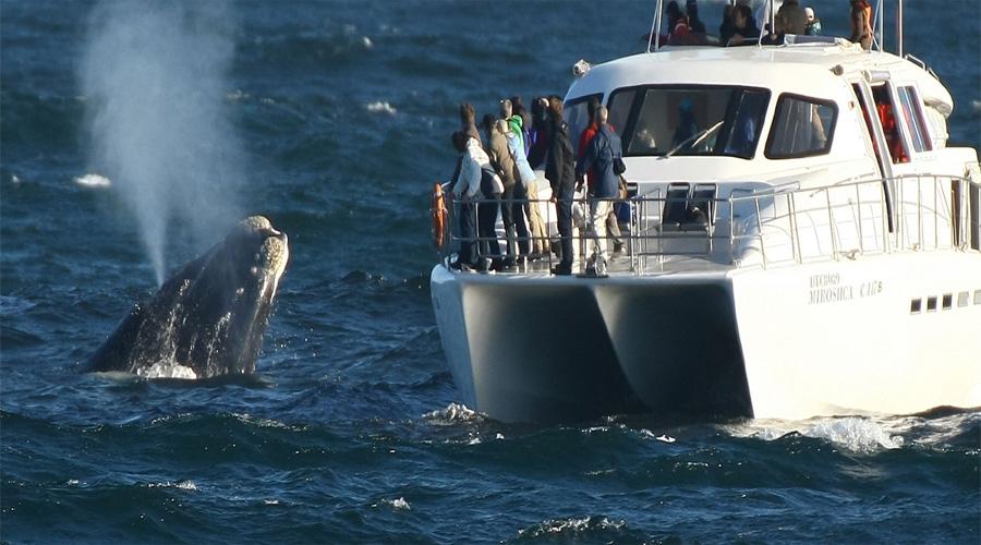 Boat Trip Capetown