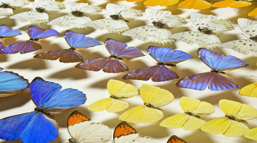 largest butterfly exhibition in Peru