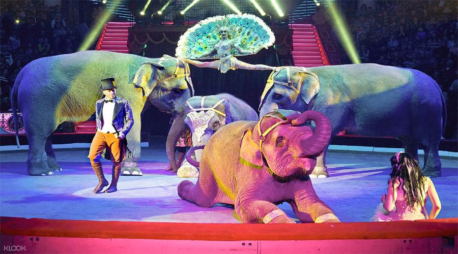 circus nikulin