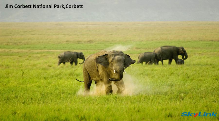 Elephant Corbett 3