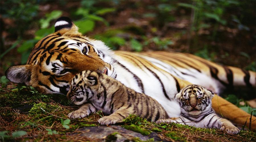 Wild life Sanctuary-Thekkady
