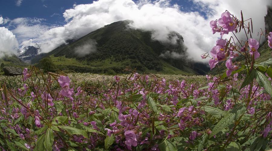 Rudraprayag Flowers