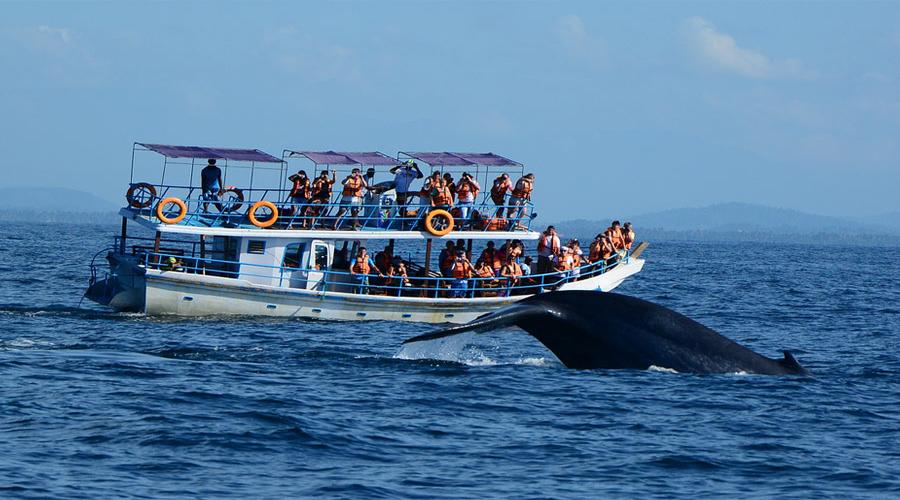 Mirsa Whale Watchg