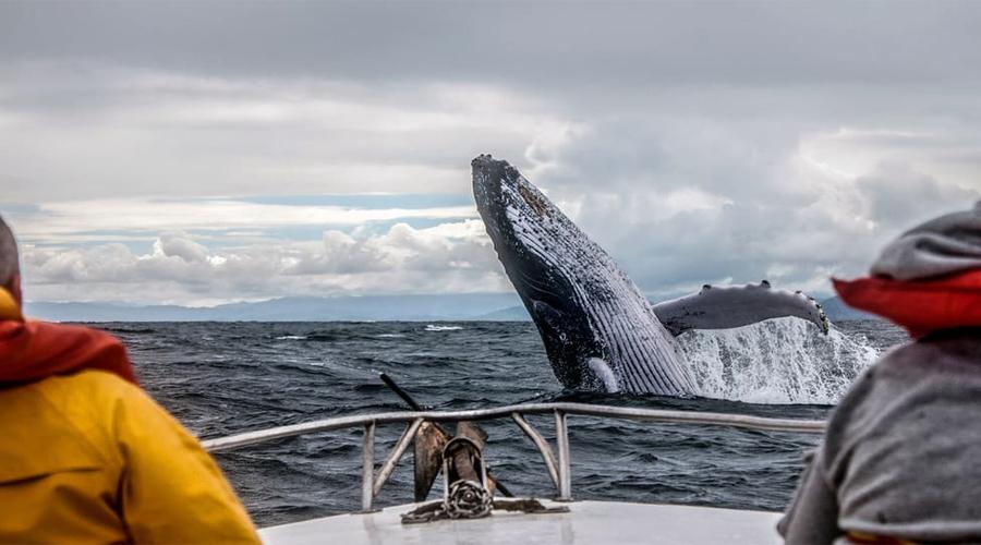 Mirsa Whale