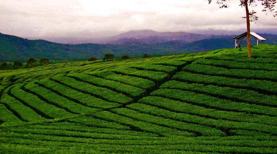 Palampur valley