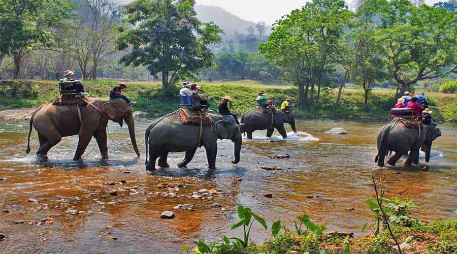 Jungle Safari at Khao Sok, Krabi