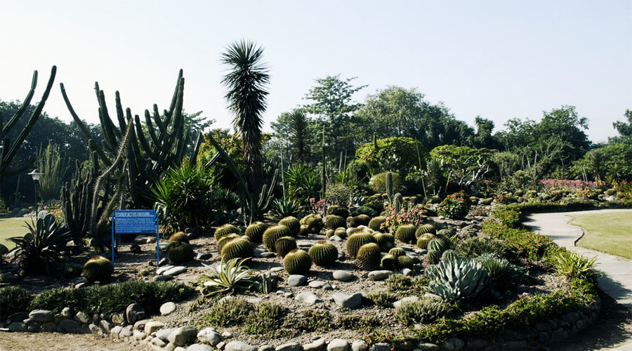 Cactus Garden in Parwanoo