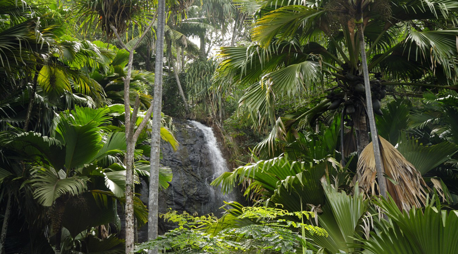 Valle de Mai Only Praslin Sightseeing