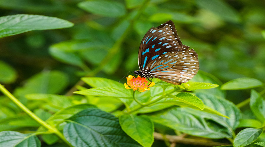 Butterfly Park,  Luang Prabang