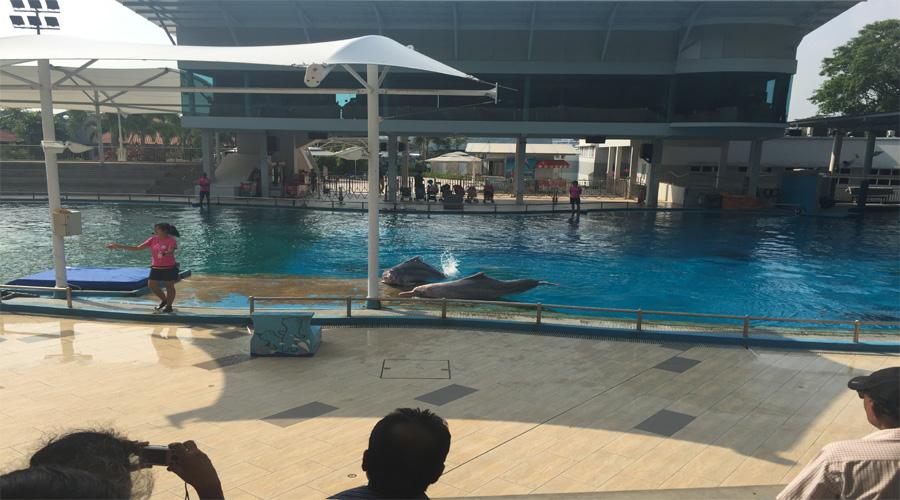 Dolphin Lagoon, Singapore