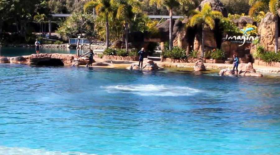 Dolphin Show goldcoast