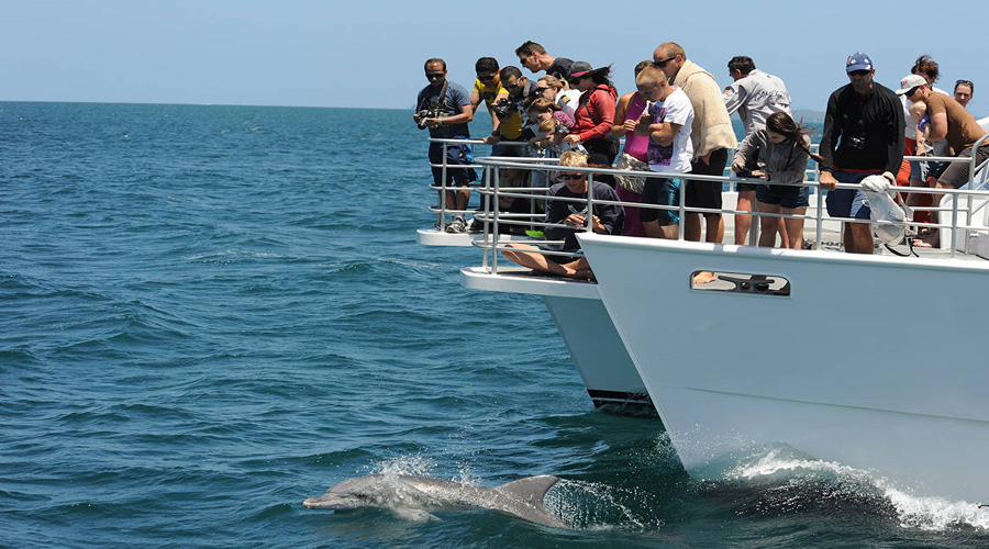 Dolphin watching Cruise tour