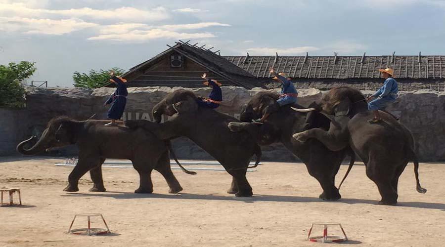 Elephant Trek, Hua Hin