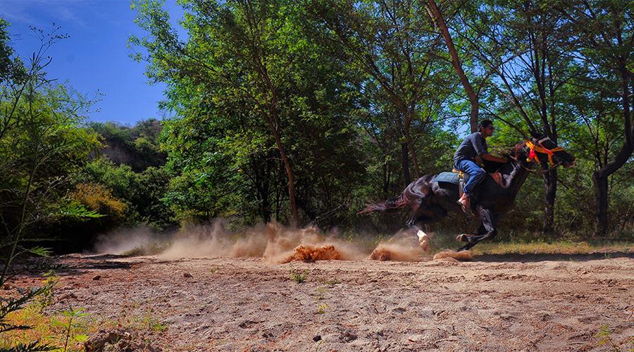 Kikar Lodge Horse Riding