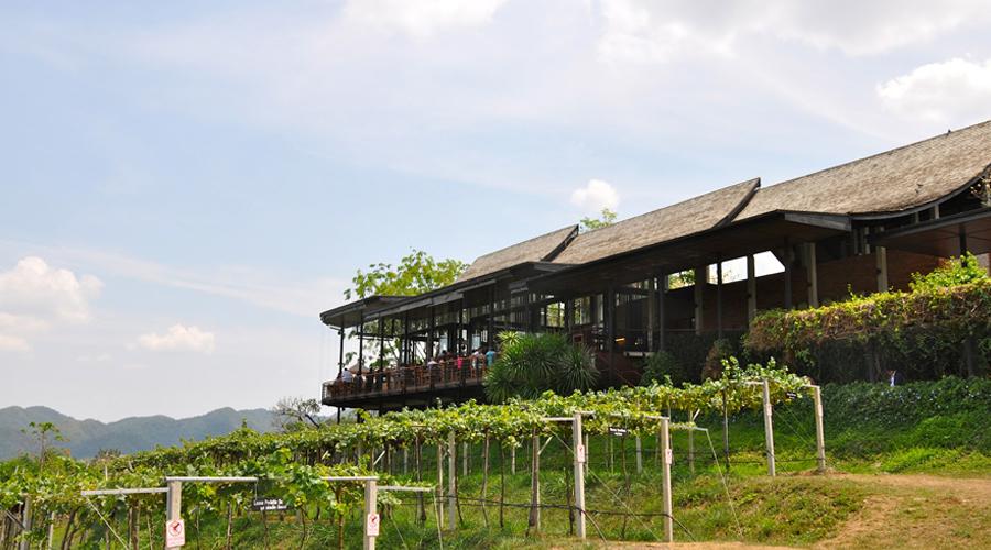 Vineyard, Hua Hin