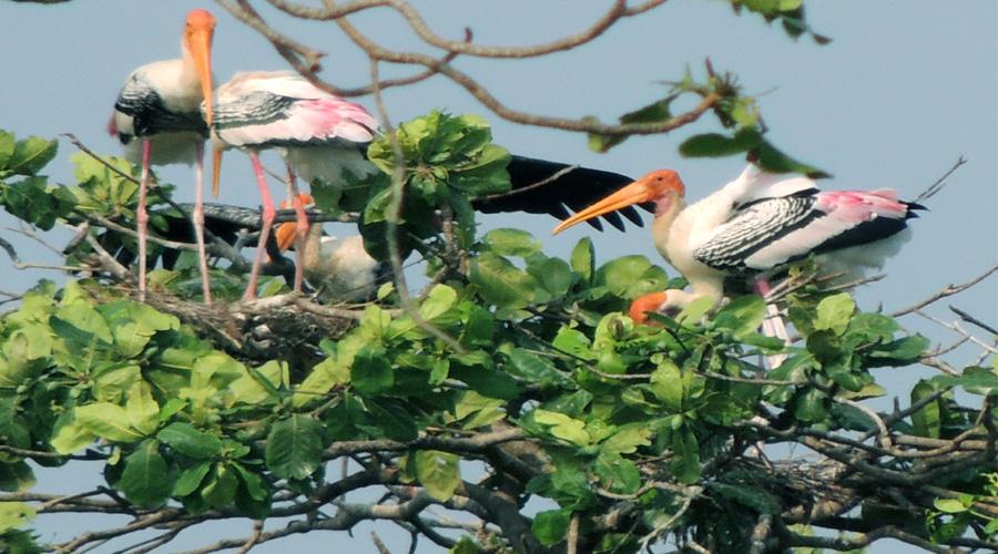 Bird Sanctuary, Kumarakom