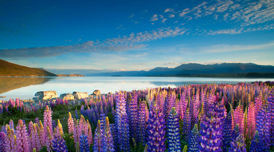 Lake tekapo, Christchurch