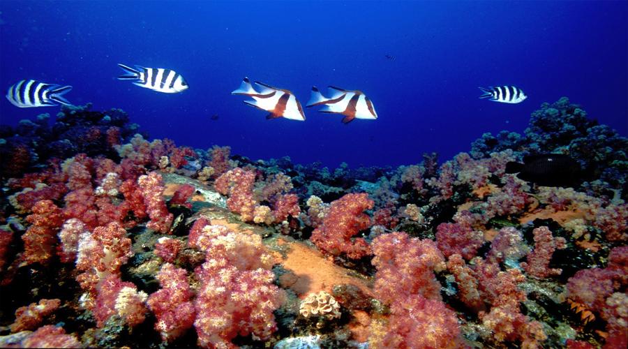 Mahe diving