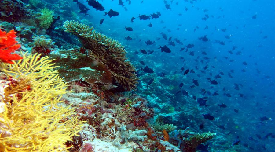 male reef
