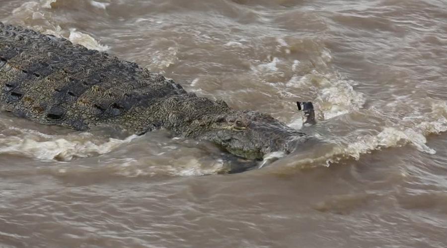Masai Mara River