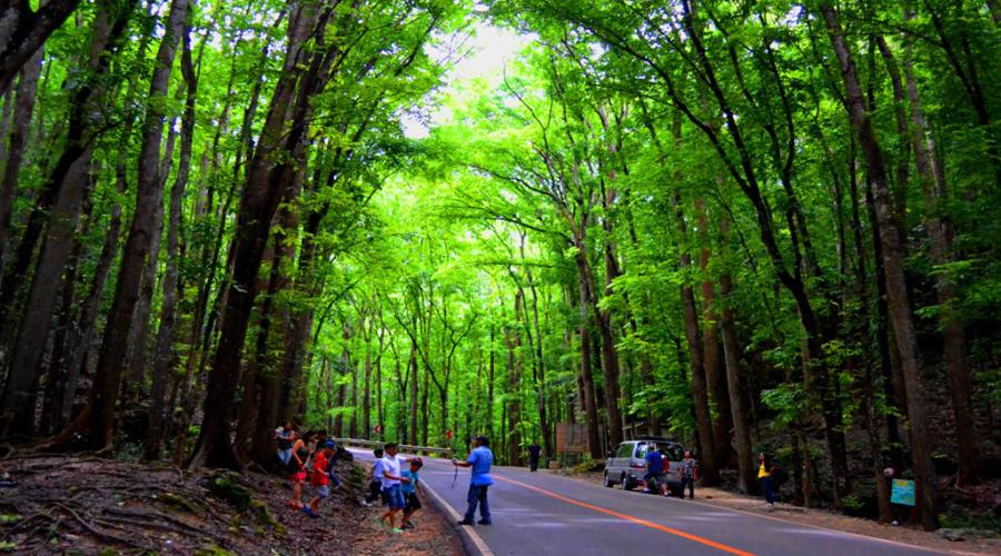 Bilar Man-Made Forest
