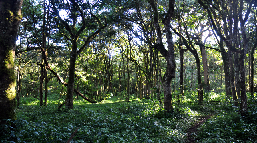 Mt Kenya Forest