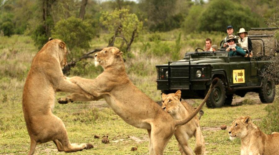 Kruger Nation Park
