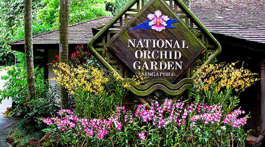 orchid garden singapore