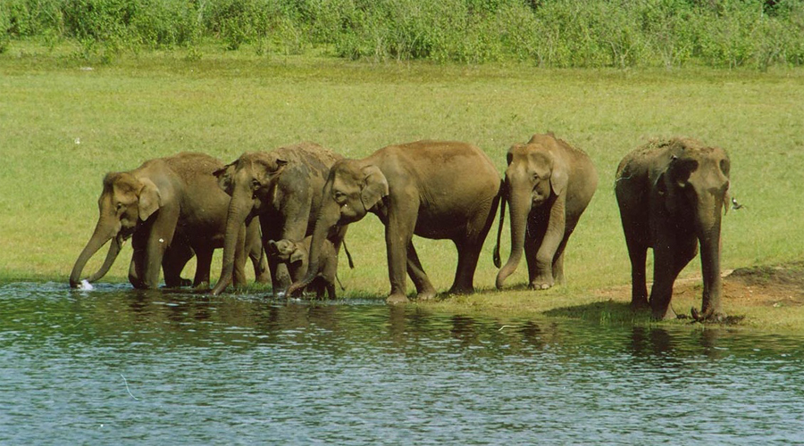 Periyar National Park 7 Thekkady