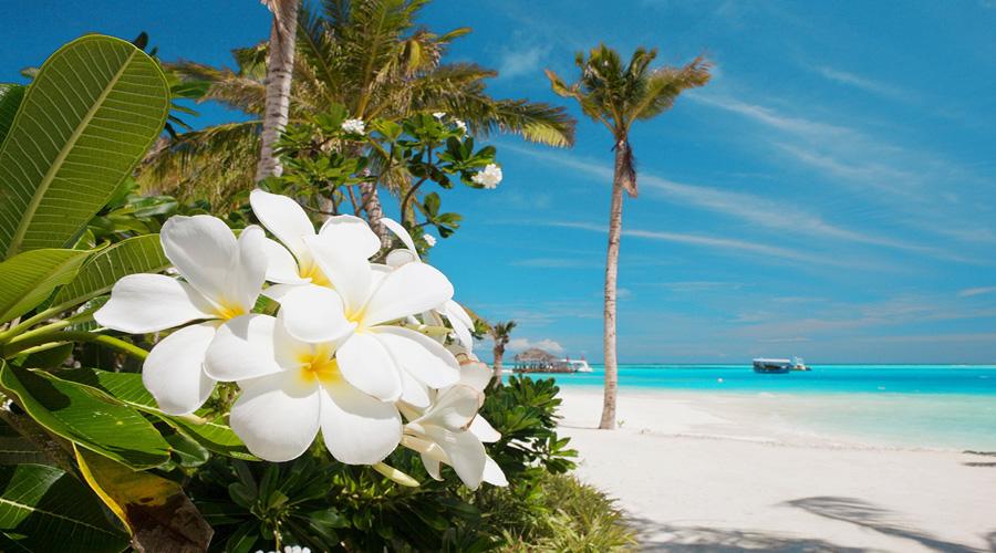 Royal Island Beauty