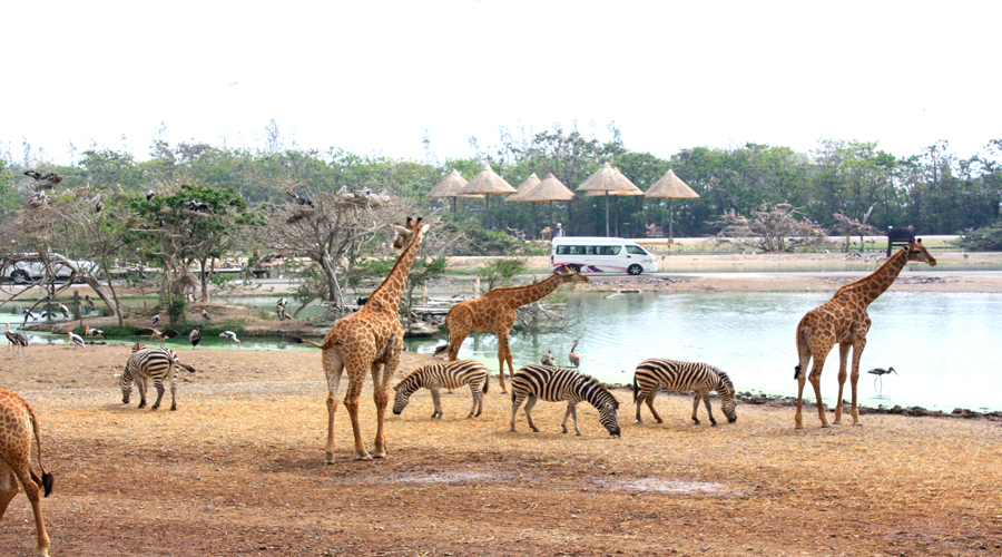 Safari Park, Bangkok