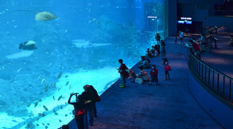 S.E.A Aquarium (Sentosa Sun Pass)