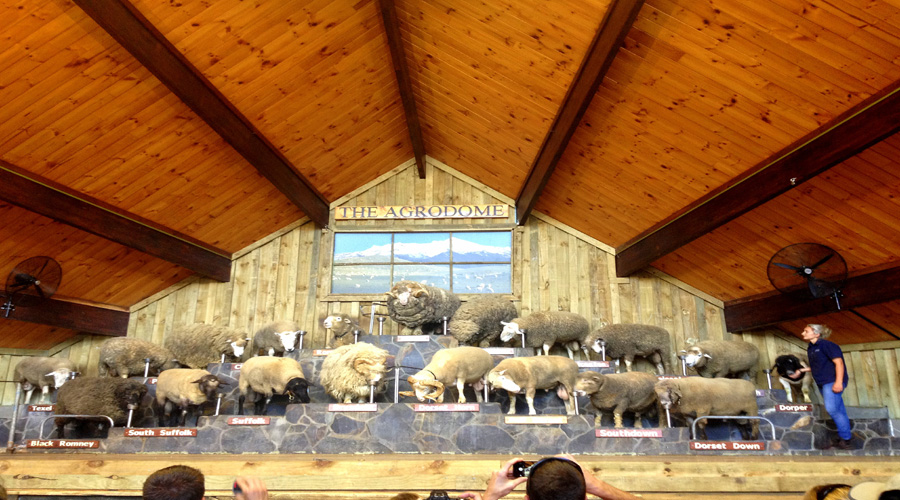 Sheep Show, Rotorua