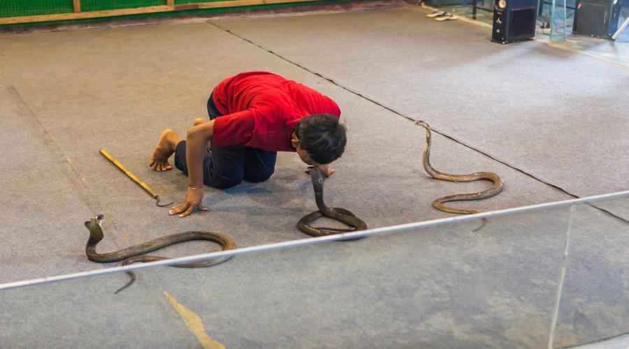Snake Show, Hua Hin