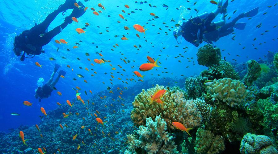 Snorkelling, Andaman Island
