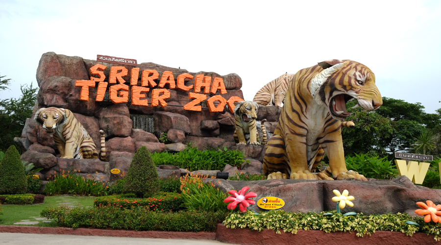 Sri Racha Tiger Zoo, Pattaya