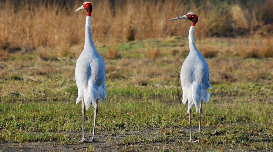 Sultanpur Bird Santuary