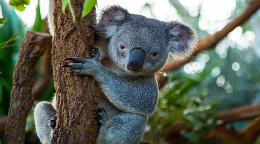 Wildlife Sydney