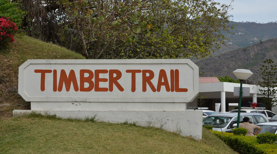 Timber Trial