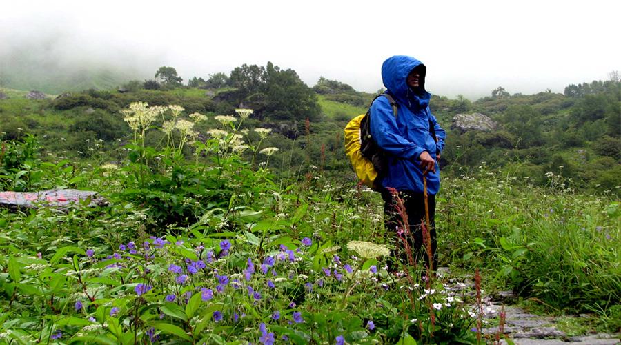 Flowers in Valley
