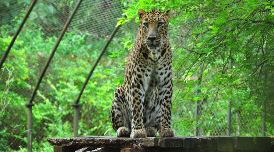 Zoo Nahan